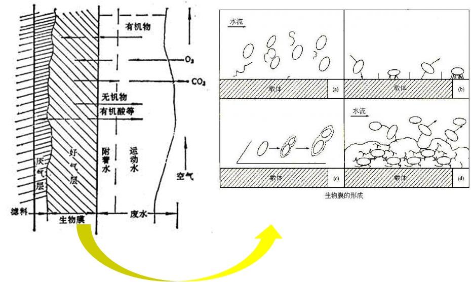 生物膜反应图