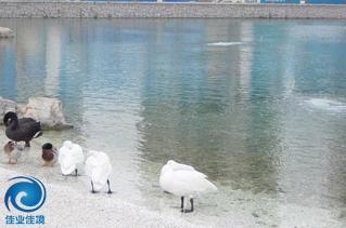 采用HDP技术进行景观水处理